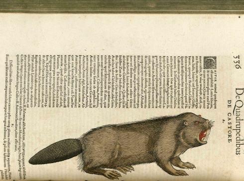 gessner-beaver_28