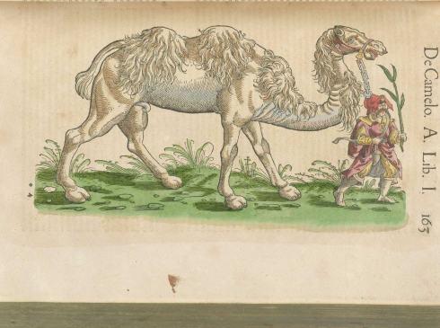 gessner-camel-1
