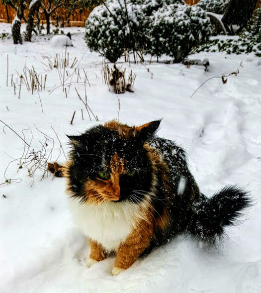 snowy-saturday-12