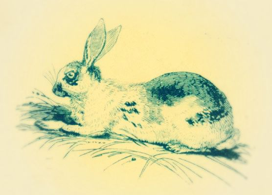 Lop 3 up eared rabbit