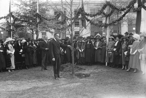 Tree Planting Coolidge 1922