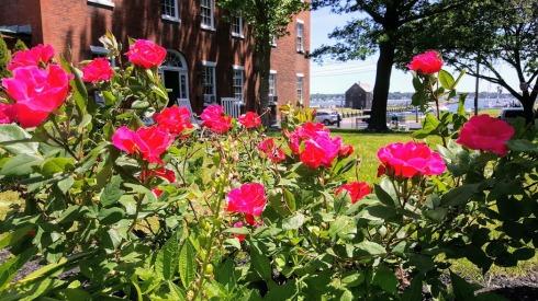 June Roses 5