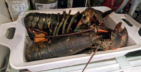 July 4 Lobsters