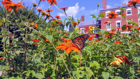 Late August butterfly