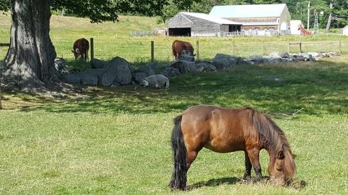 Tamworth Livestock