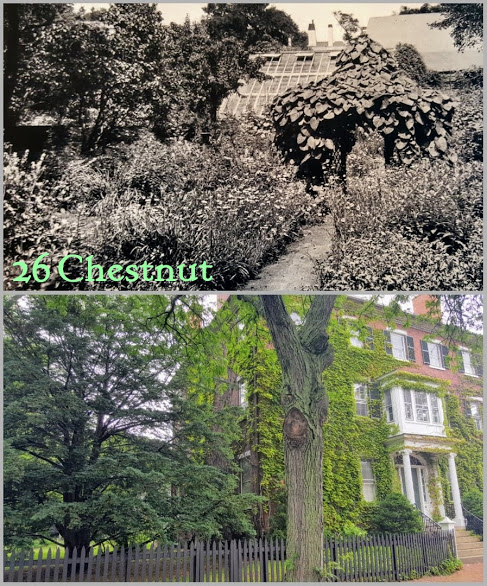 Garden 26 Chestnut